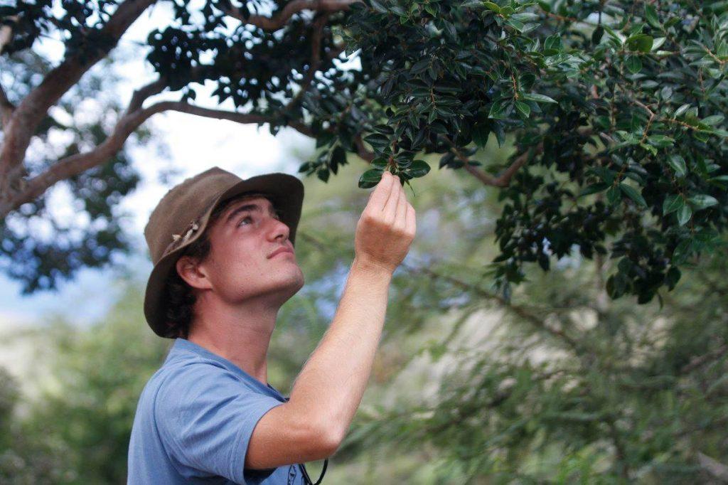 Bryan examines native guava.